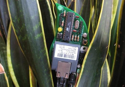 twitter-for-plants